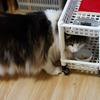 O次郎 萌えよ猫草