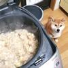 ストックを1食分ずつにしてみた ~犬ごはん~