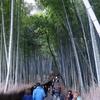 2017年2月 京都【1/2】「御室会館 泊」嵐山って何があるの?初めての嵐山観光と仁和寺宿坊で早朝お勤め参加。