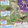 「トノサマガエルとシュレーゲルアオガエルとアマガエル」ガチャやったら欲しかったトノサマガエルを一発でゲット!