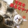 だらける猫!長女'ぽんず'の日常。寝ているところを撮ってたら怒られた!そない怒らんでも‥