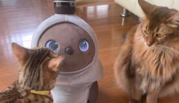 【後編】最新型ペットロボット「LOVOT」と一緒に暮らしてみた 〜ロボットと人間の新しい関係:ななみんのIoTおうちハック