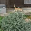 自由猫ダイちゃん、早起きする