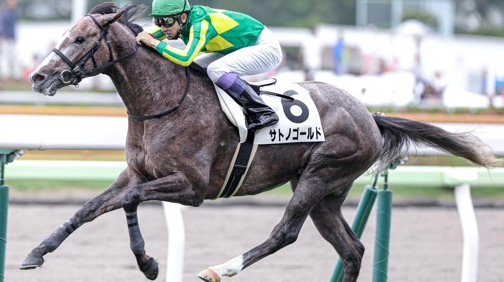 【今週のデビュー馬情報】ハープスターの妹ゴールドティアや友道厩舎ジュンライトボルトが登場!