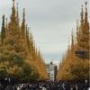 明治神宮外苑を目指してランニング〜イチョウ並木は黄金色に輝いていました〜