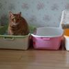 猫さんが新しいトイレを使いました