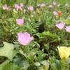 長い梅雨の果ての庭