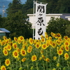 『関ヶ原古戦場決戦地』の近くにあるひまわり畑。