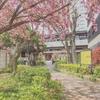 写真日記 ~2019-04-22