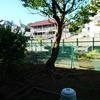 今朝の裏庭の姿❗️
