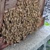 2016年6月 はちみつ紀行・養蜂場の夏支度