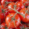 夏野菜であるトマトが美容にもたらす効果