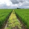 農業と時代とスーパー