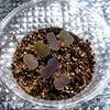 「紫チンゲンサイ」を遮光仕様の水耕栽培装置で育てています。液温と藻の状態を確かめましょう