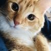 【ネコ】今日は手術のため病院へ