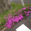 5月21日 あの日見た花の名前はこれな。これな。