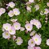 """山下公園が薔薇で包まれる""""ガーデンネックレスヨコハマ2021""""に行ってきたよ!"""