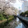 高崎城址公園周辺散歩 お堀の染井吉野・里桜たち・名称不明の赤い花・チューリップ