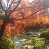 紅葉の京都を訪ねて