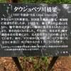 北海道 上士幌町 タウシュベツ川橋梁 / 幻を見た