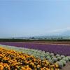 【北海道】期間限定のラベンダーエクスプレスに往復乗車!札幌から日帰りで富良野へ行ってきた