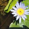 植物紀行2