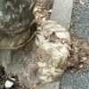 縁石を囲む街路樹
