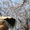 育休77日目  お花見