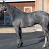 シルクホースクラブ 第2回追加募集馬 占い&馬体診断