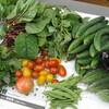 夏野菜たっぷり献立