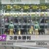 【シルク】ボアヴィスタ 3戦目 未勝利