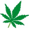 賃貸物件で大麻栽培