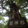 【登山】杉を見る(屋久島)