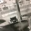 永田收写真展『誰もいない展覧会 ~猫の眼~』その3