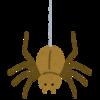 VSデカイ蜘蛛