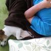 毛布の出番