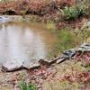 池の周りに石を配置する