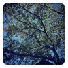 どうせ散りゆくならば桜のように美しくマッチョになろうよマイボディ