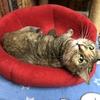 かわいいネコたちが暮らす保護猫カフェ「ネコリパブリック」に入国