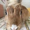 【ウサギ】が人参好きだってのはうさんくさいの話