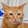 猫写真~我が家の変顔コンテスト~
