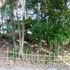 愛知県名古屋市 尾張戸神社古墳跡