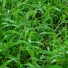 NHKスペシャル「足元の小宇宙~生命を見つめる植物写真家~」を観て。凄い!