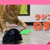 【ネズミのラジコンで猫と遊んでみたら予想外に結果に。】