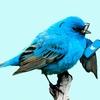 【報告と考察】Twitterで自身のブログを拡散する上での注意点と新たなご報告