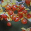 10月29日花と花言葉・歌句