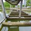 草深公園の池(千葉県印西)
