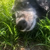 天国へ旅立った愛犬へ また逢おうね。ずーっと ずっと だいすきだよ