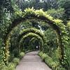 シンガポールで唯一の世界遺産「シンガポール植物園」でピクニックしてきた
