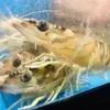 大阪 梅田 「酒場 やまと」いけすのある大人気の大衆居酒屋。活きのいい魚で昼間っから一杯